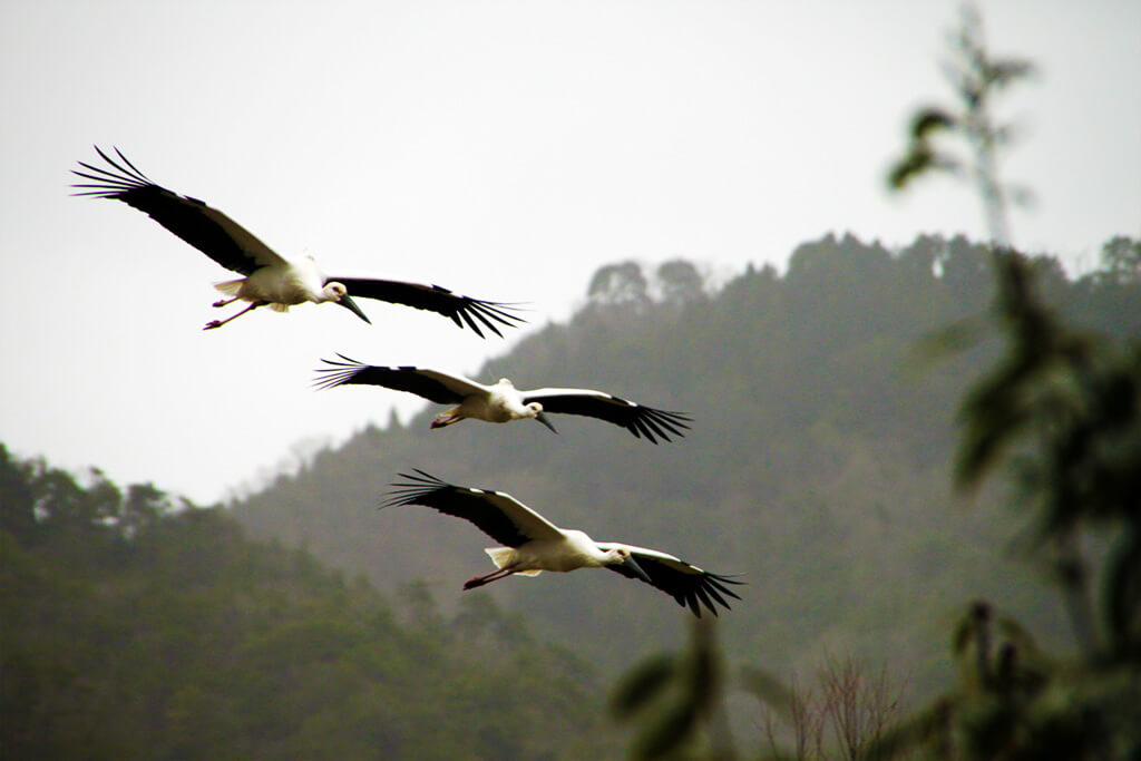 Park of the Oriental White Stork (Toyooka city, Hyogo)